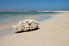 Dood koraal op de bank van het rode overzees Royalty-vrije Stock Fotografie