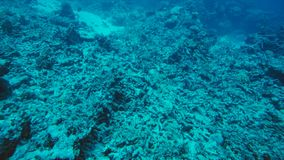 Dood koraalrif gedood door het globale verwarmen en klimaatverandering stock foto's