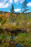 Dood meer in het bos, Ð ¡ arpathian bergen, Skole, Uktaine Stock Afbeelding