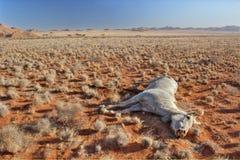 Dood paard in woestijnlandschap Stock Afbeeldingen