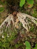 Dood van een vlinder Stock Fotografie