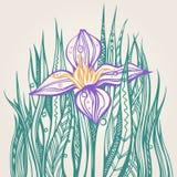 doodle λουλούδι Στοκ Φωτογραφίες