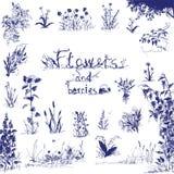 Doodle, нарисованные рукой цветки и ягоды Законспектированные синью элементы дизайна Абстрактная флористическая предпосылка стоковая фотография rf