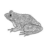 изолированная лягушка Черно-белая орнаментальная лягушка doodle Стоковое фото RF