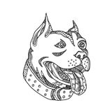 Pit Bull Head Doodle Art. Doodle art illustration of head of pit bull,American Pit Bull Terrier, American Staffordshire Terrier, American Bully or Staffordshire Stock Image