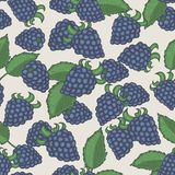 Doodle blackberries seamless pattern Stock Images