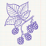 Doodle blackberry Stock Images