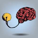 Doodle Brain And Bulb Light Royalty Free Stock Image
