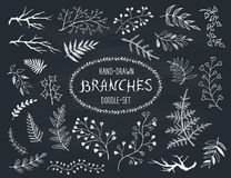 Doodle branches set. Hand drawn branches collection. Set of doodle branches on chalkboard. Floral decorative elements for postcard and invitation design Royalty Free Stock Photography