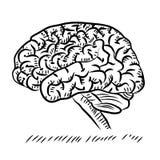 Doodle Cerebellum ludzki mózg anatomii boczny widok na białym tle royalty ilustracja