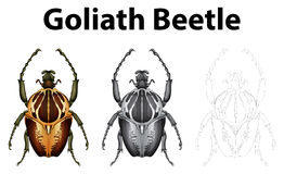 Doodle character for goliath beetle Royalty Free Stock Photo