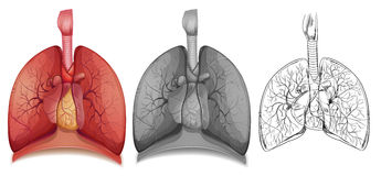 1Doodle character for human lungs. Illustration vector illustration
