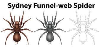 Doodle character for sydney funnel web spider Royalty Free Stock Image