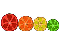 Doodle citrus slices Royalty Free Stock Photos