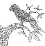 Doodle design of parrot on branch for adult coloring book vector illustration