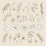 Doodle elements for design. Flowers, buds, leaves. Stock Image