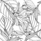 Doodle floral tropical background in vector with doodles black and white coloring page. Paradise flowers, banana leaves royalty free illustration