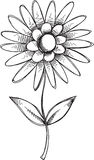 Doodle Flower Vector Royalty Free Stock Photo