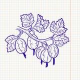 Doodle gooseberry Stock Photos