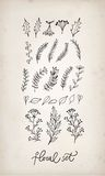 Doodle  hand drawn floral elements Stock Image