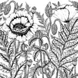 Doodle kwiecistego tło w wektorze z doodles kolorystyki czarny i biały stroną royalty ilustracja