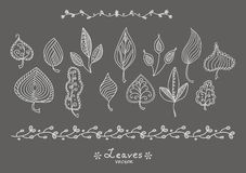Doodle leaves. Doodle hand-drawn leaf skeletons vector illustration