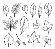 Doodle leaves vector Stock Photo