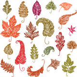 Doodle leaves. Vector drawing of the various decorative leaves stock illustration