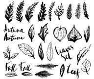 Doodle liście ustawiający ilustracja wektor