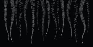 Doodle line floral on black background. Vector illustration Royalty Free Stock Image
