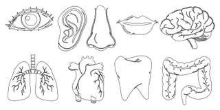 Doodle projekt różne wewnętrzne i zewnętrznie części ciała ilustracja wektor