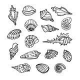 Doodle set of seashells. On white background. Hand drawn vector illustration Stock Photos