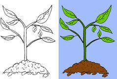 Doodle Small Plant (colorful and outline) Stock Photos