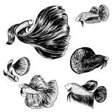 Doodle style, Siamese fighting fish Stock Image