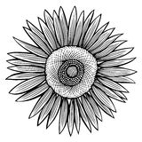 Doodle sunflower contour Royalty Free Stock Image
