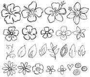 doodle szkicowy tropikalny wektor Zdjęcie Royalty Free