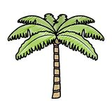 Doodle tropical palm nature tree style. Vector illustration stock illustration
