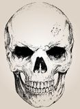 Doodle vector skull with easy edited Stock Images