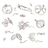Doodle Vegetables sketch vector Royalty Free Stock Photo