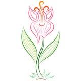 Doodle wektorowy abstrakcjonistyczny handdrawn gladiolus Obrazy Royalty Free
