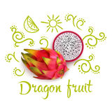 Doodles Around Dragon Fruit. Doodles with flourishes citrus slices and typographic lettering around 3d dragon fruit on white background vector illustration Royalty Free Stock Images