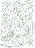 Doodles de las hojas Fotos de archivo