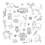 Doodles woodland set of animals and insects. Stock Photography