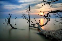 Doodsboom bij het strand royalty-vrije stock fotografie