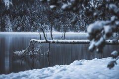 Doodsboom in het meer royalty-vrije stock fotografie