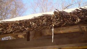 Dooi in de lente Waterdruppels van met stro bedekt dak stock footage