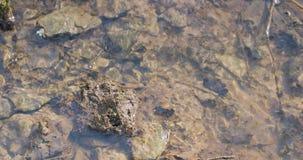 Dooi en rivierbeweging in de lente stock video