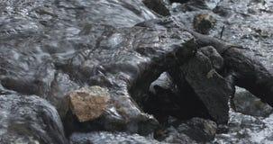 Dooi en rivierbeweging in de lente stock videobeelden