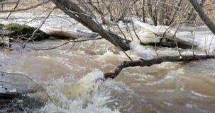 Dooi en rivierbeweging door gevallen takken van bomen stock video