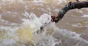 Dooi en rivierbeweging door gevallen takken van bomen stock footage